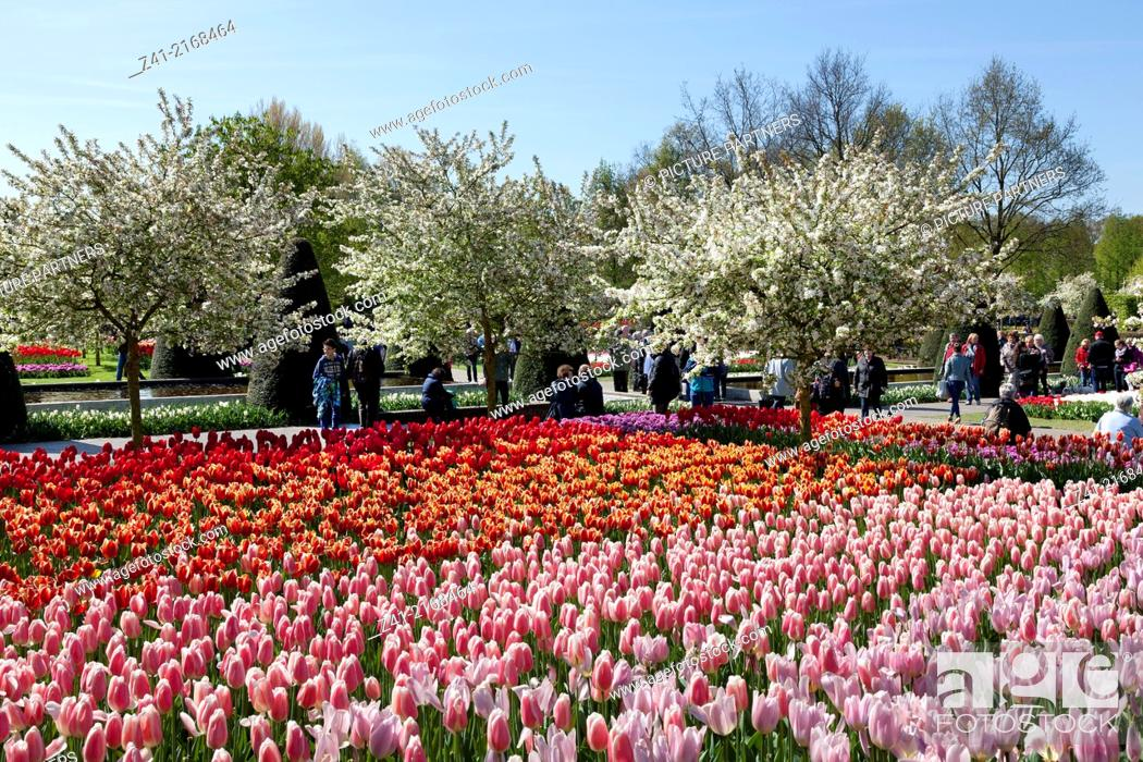Stock Photo: Tulips and tourists in the Keukenhof in Lisse, Holland.