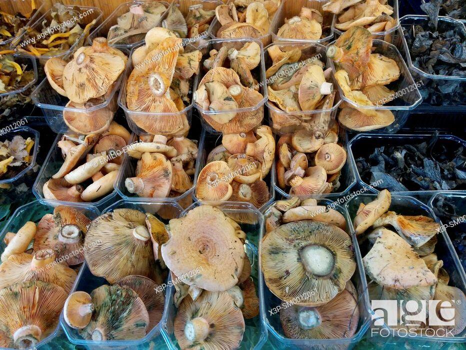 Stock Photo: Assorted mushrooms.