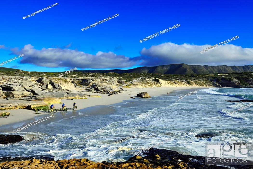 Photo de stock: Mountain bikers with Fatbikes at the beach, bicycle tour at Die Plaat Beach, Nature Reserve, De Kelders, Gansbaai, Western Cape, South Africa.