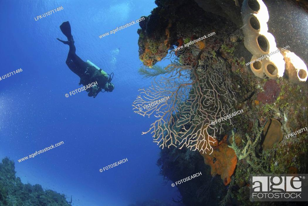 Stock Photo: Scuba Diver over coral and sponge reef, Cayman Islands, Caribbean.