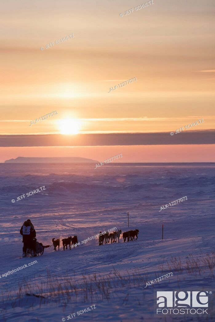Imagen: Mark Selland on the trail a few miles from Nome at sunset during Iditarod 2015.