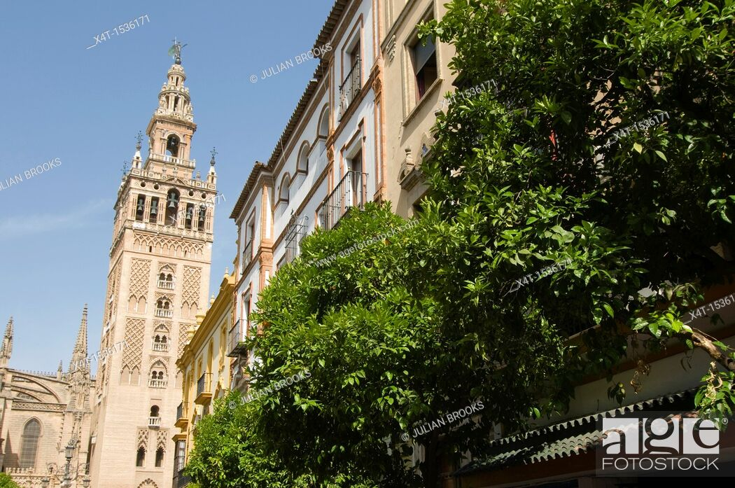 Stock Photo: Looking up at the Giralda tower in Seville, Orange trees in foreground.