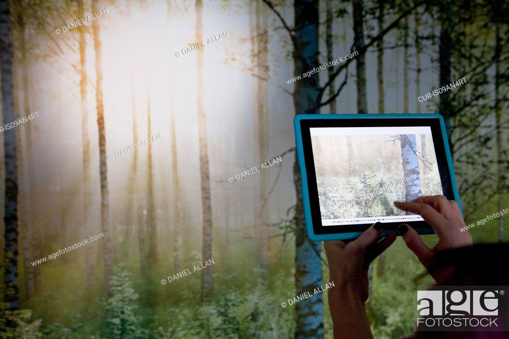 Imagen: Person using digital tablet to photograph woodland scene.
