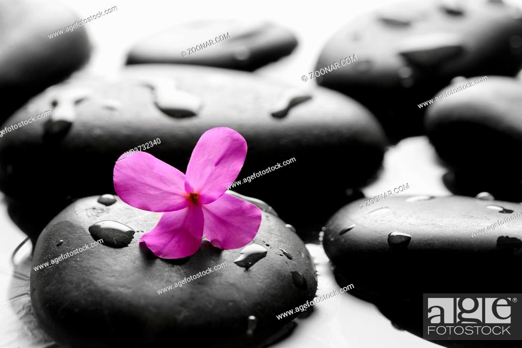 Stock Photo: Black wet pebbles with flower background.