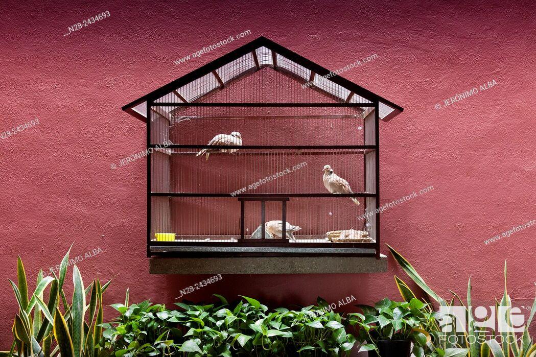 Imagen: Pigeons, Museo Universitario Alejandro Rangel Hidalgo, Nogueras. Colima, Mexico.