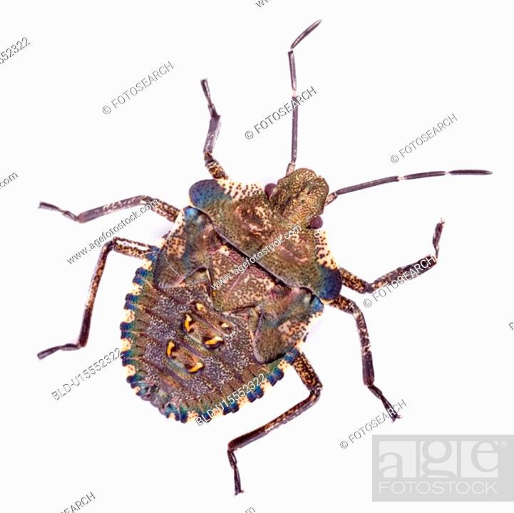Stock Photo: detail, detail admission, details, Freigestellte, Freisteller, larvae, macro.