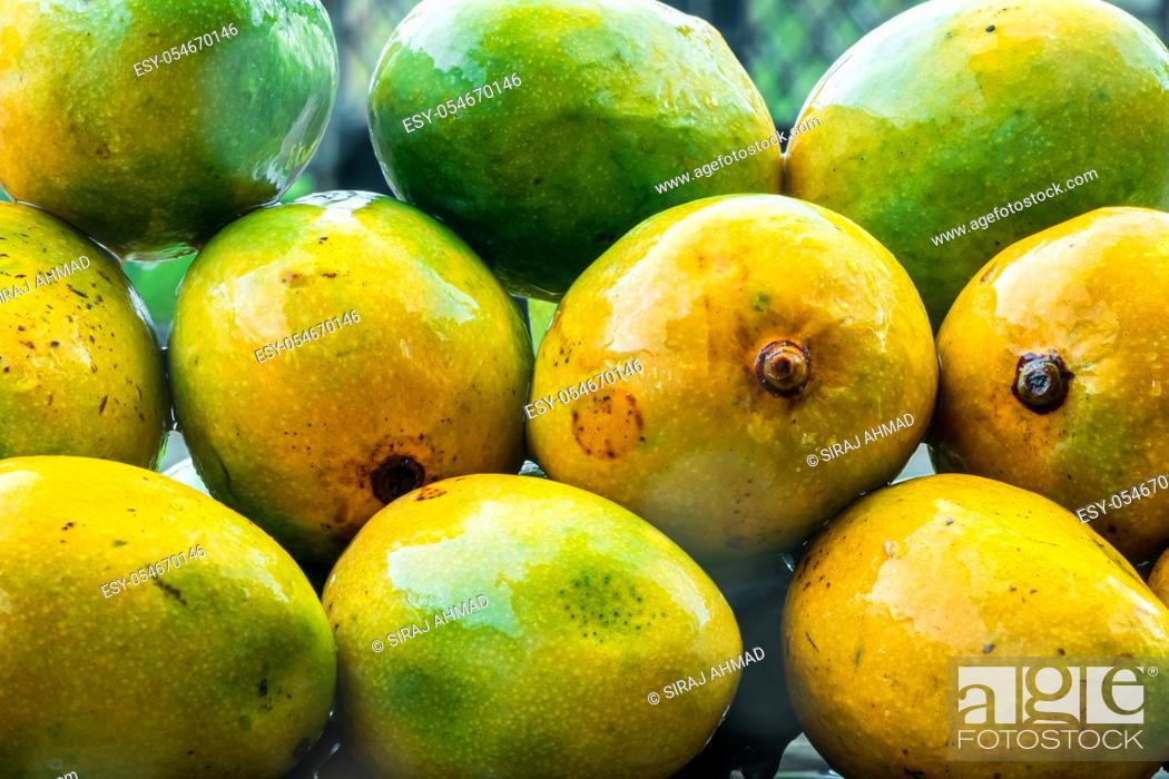 Stock Photo: Fresh Harvest Seasonal Organic Alphonso, King of Mango, placed in rain. Sweet delicious mango in monsoon season.