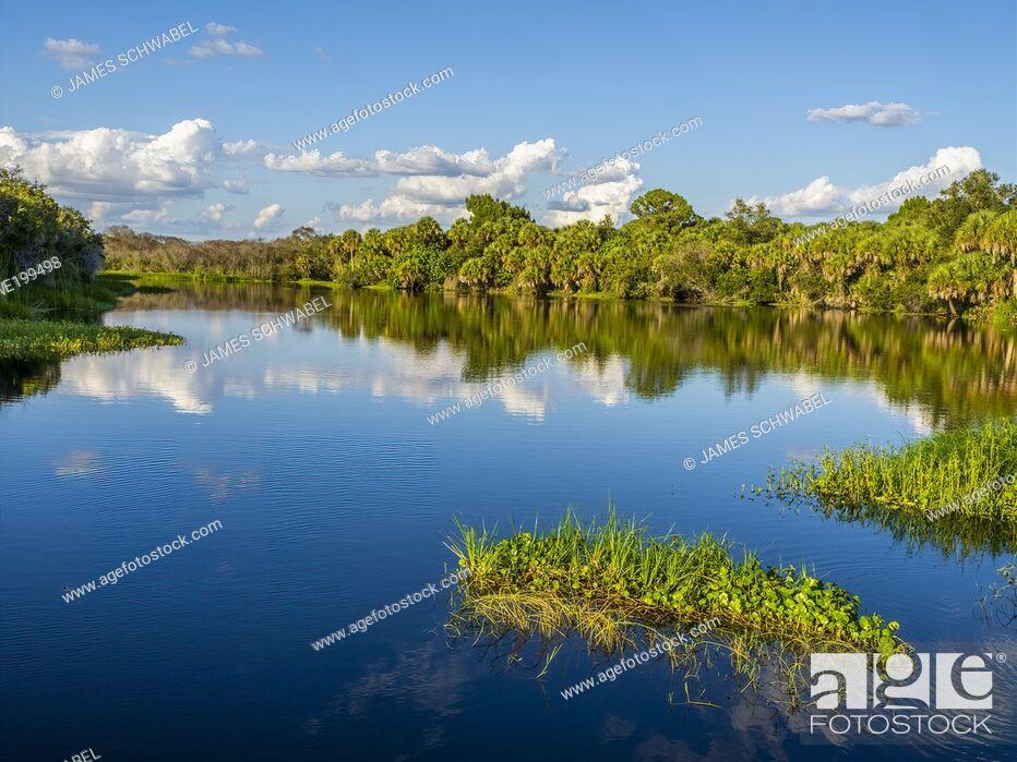 Photo de stock: Deer Prairie Creek in Deer Prairie Creek Preserve in Vemice Florida in the United States.