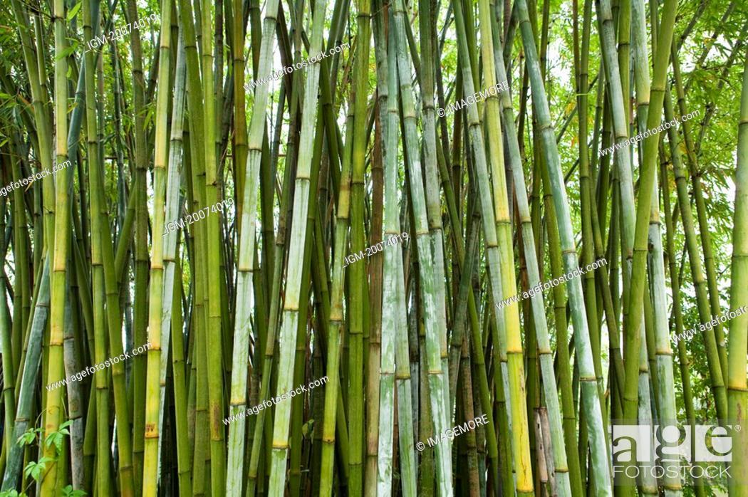 Stock Photo: Bamboo woods.