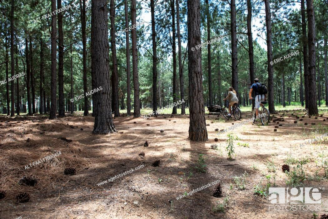 Stock Photo: Young couple cycling in pine forest.