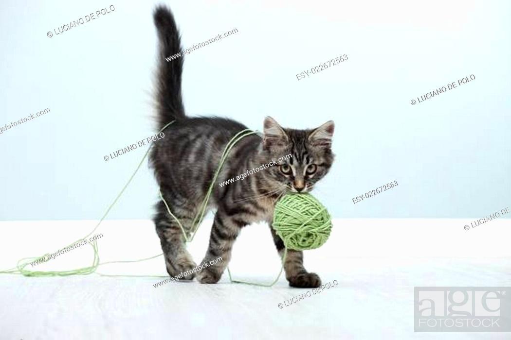 Stock Photo: Playful kitten.