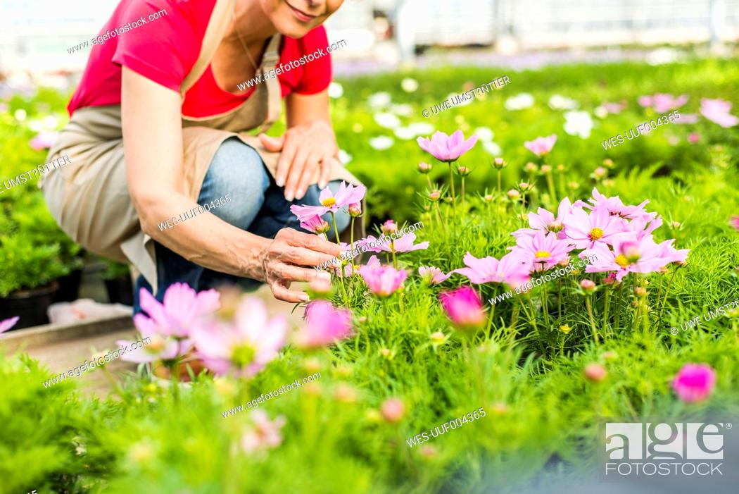 Stock Photo: Woman in nursery examining flower.