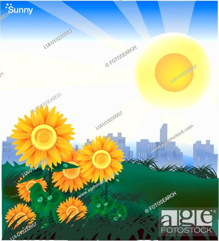 Stock Photo: sunflower, landscape, flower, field, sunny, seasons, weather.