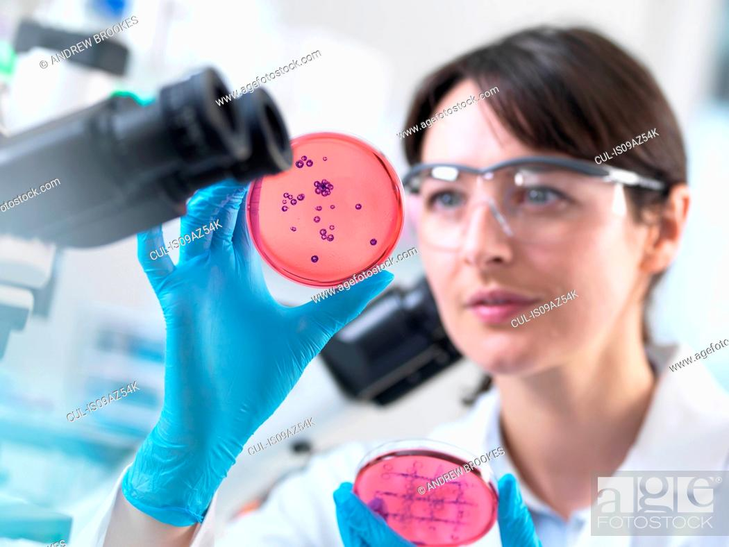 Imagen: Scientist examining petri dish containing bacterial culture grown in laboratory.
