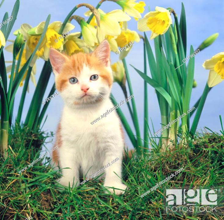 Stock Photo: Ginger Cat.