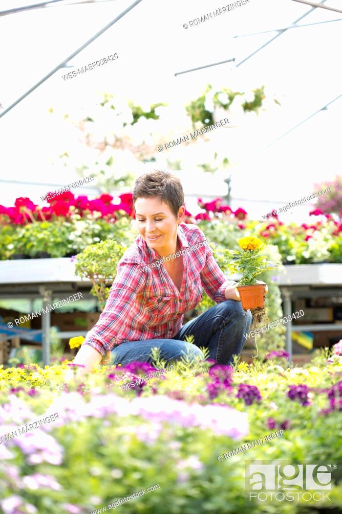 Stock Photo: Female gardener working in greenhouse.
