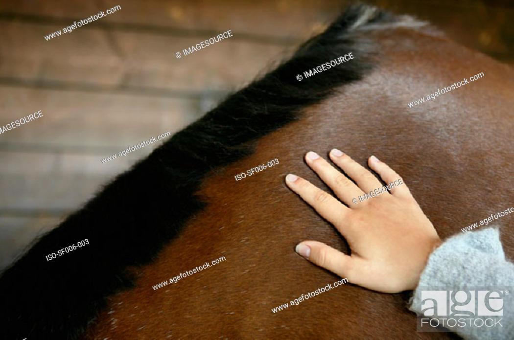 Stock Photo: Person stroking a bay horse.