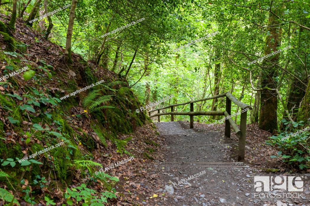 Stock Photo: Path in the Lydford Gorge Natural Reserve, Devon, UK.