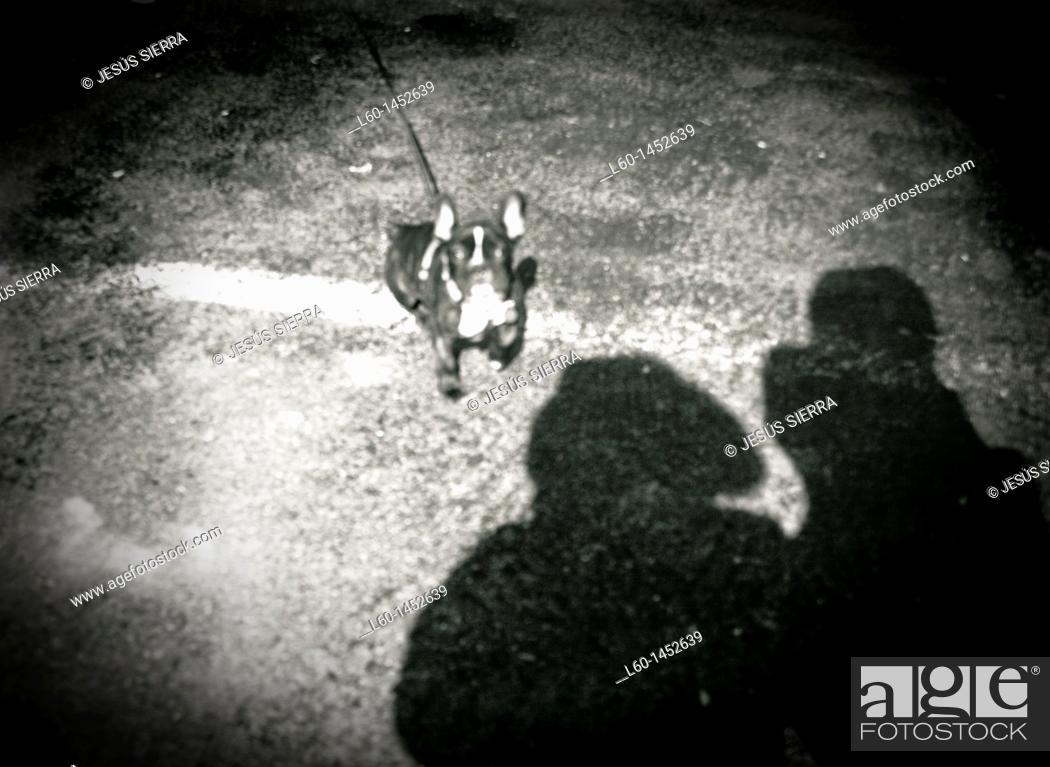 Stock Photo: Dog and shadows, France.