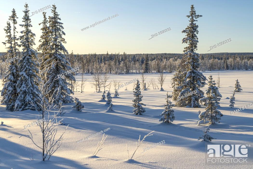 Stock Photo: Winter landscape with clear blue sky and sunshine, snow on the trees, Gällivare county, Swedish Lapland, Sweden.