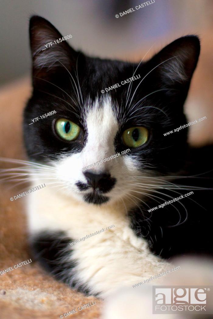 Imagen: Cat.