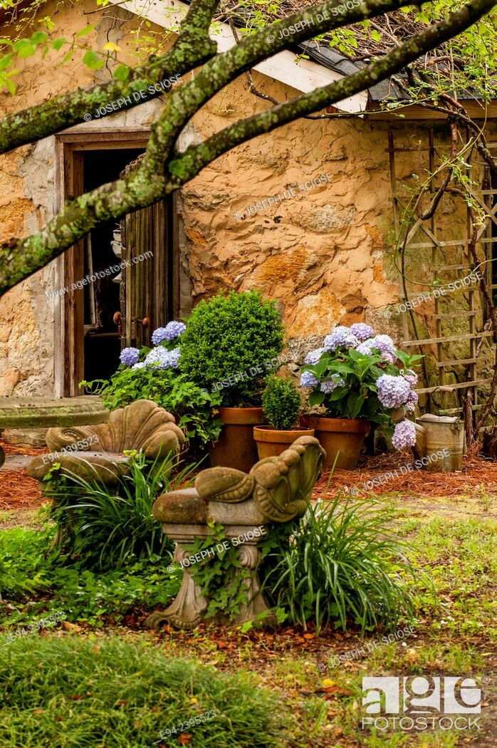 Stock Photo: A garden cottage with hydrangeas and boxwoods in terra cotta pots.Georgia USA.