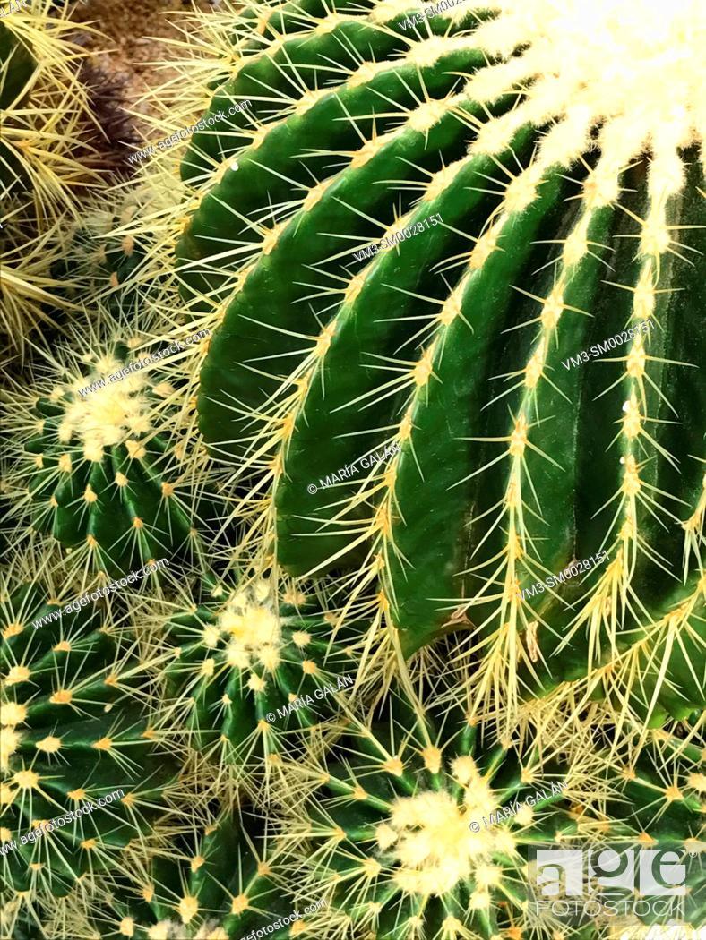 Imagen: Cactus, close view.