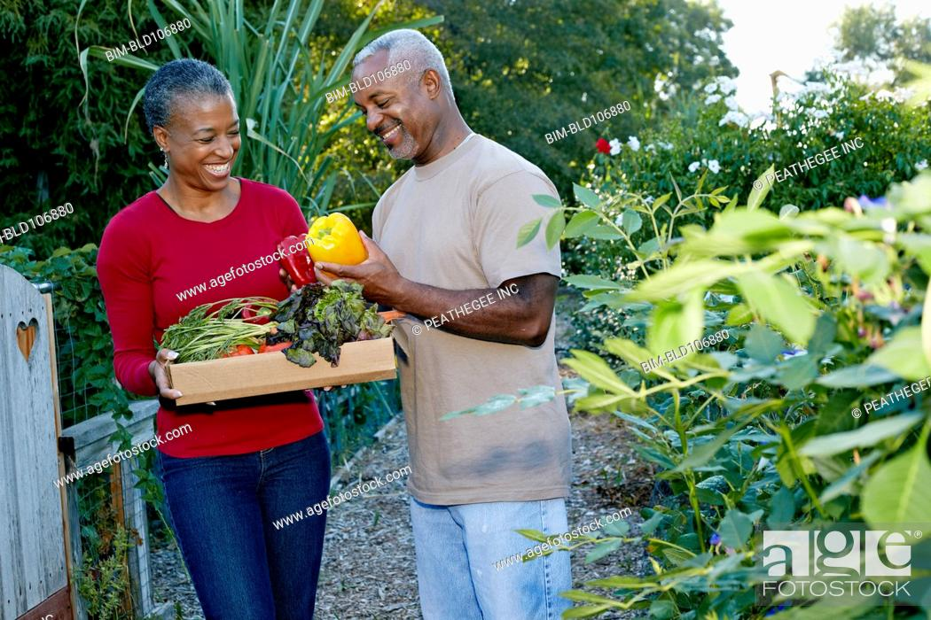 Stock Photo: Black couple gathering vegetables in community garden.