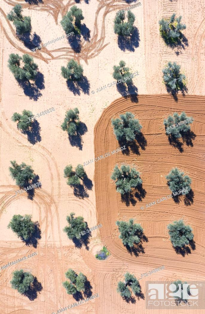 Stock Photo: Aerial view of olive groves and cereal fields, Toledo, Castilla-La Mancha, Spain, Europe.