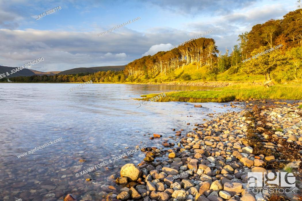 Stock Photo: Dusk at Applecross Forest in North West Highlands, Highland, Scotland.