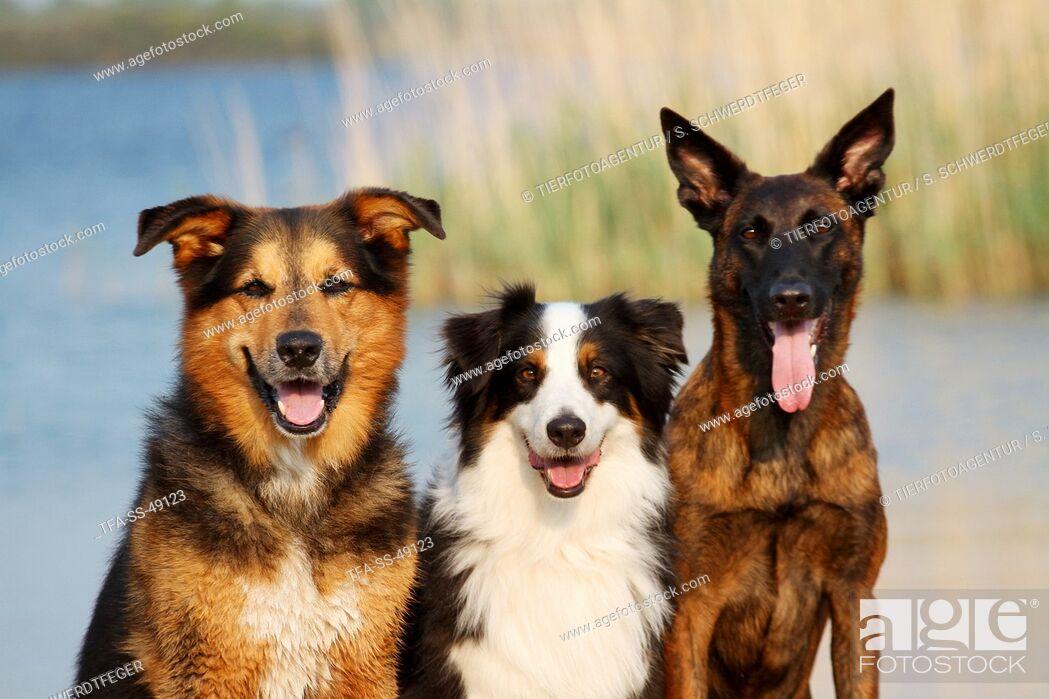 Stock Photo: 3 dogs.