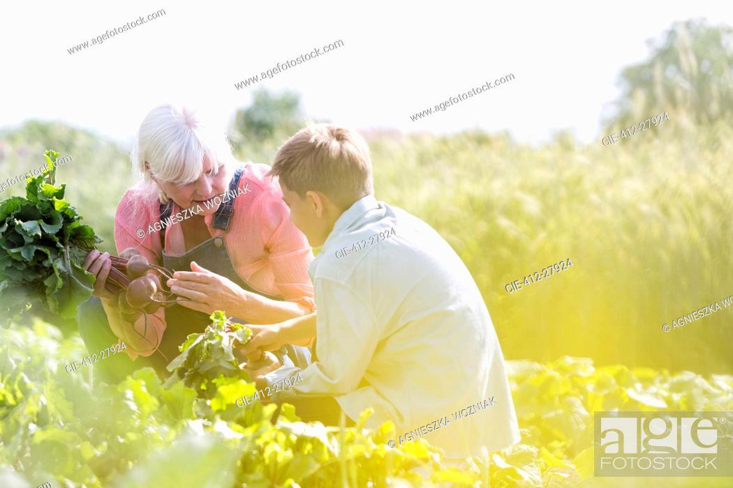 Stock Photo: Grandmother and grandson harvesting vegetables in sunny garden.