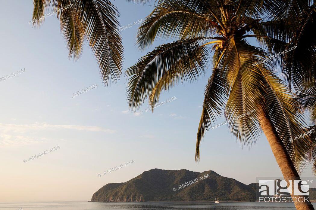 Stock Photo: Coconut palm trees. Manzanillo beach. Pacific Ocean. Colima. Mexico.