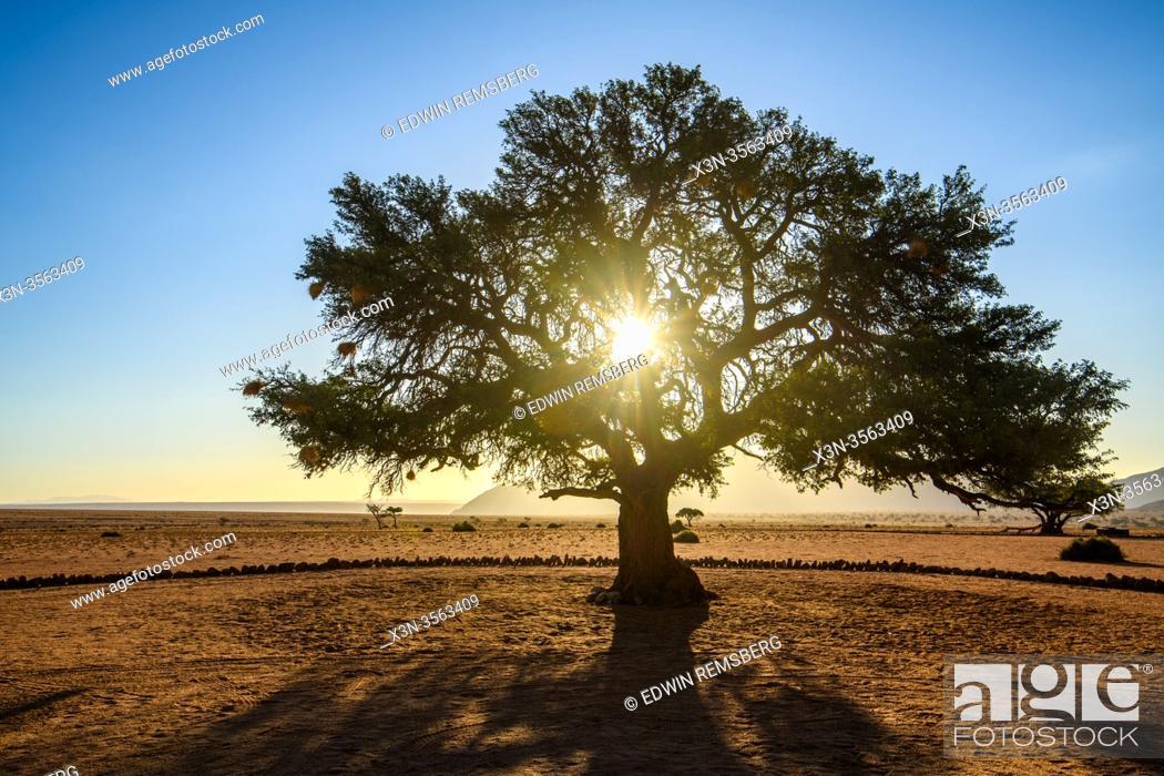 Stock Photo: Sun Shining Through a Tree at the Nambtib Biosphere Reserve , Namibia.