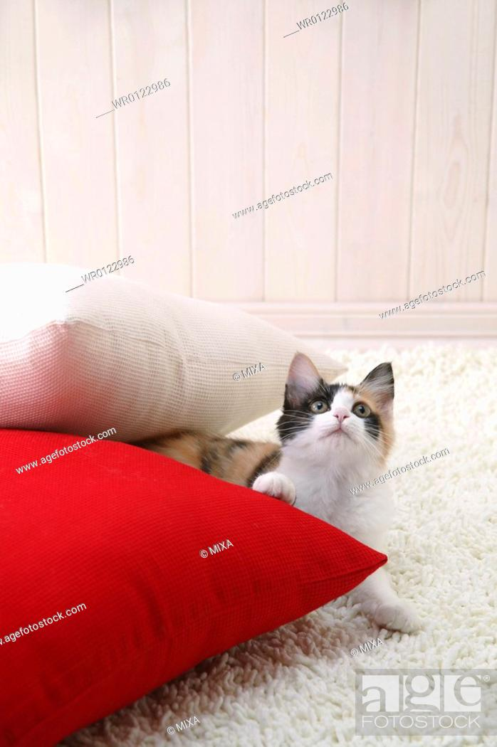 Stock Photo: Calico cat looking up.