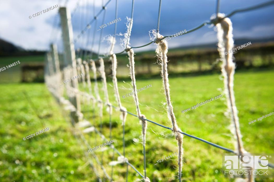 Stock Photo: Wire fence with sheeps wool, Herefordshire, England.