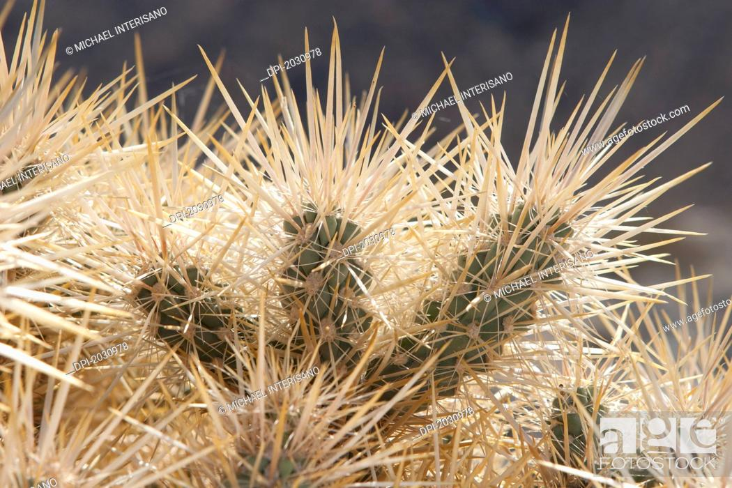 Stock Photo: Close Up Of Backlit Cactus Spikes, Palm Springs California United States Of America.