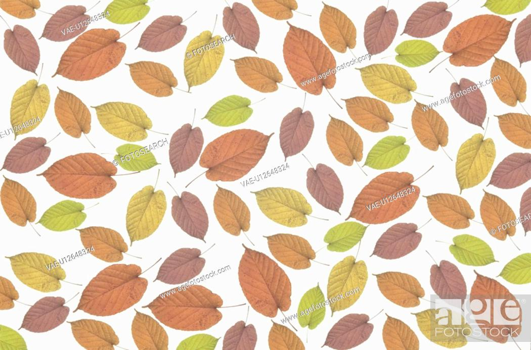 Stock Photo: The Sheet Of Autumn Leaves.