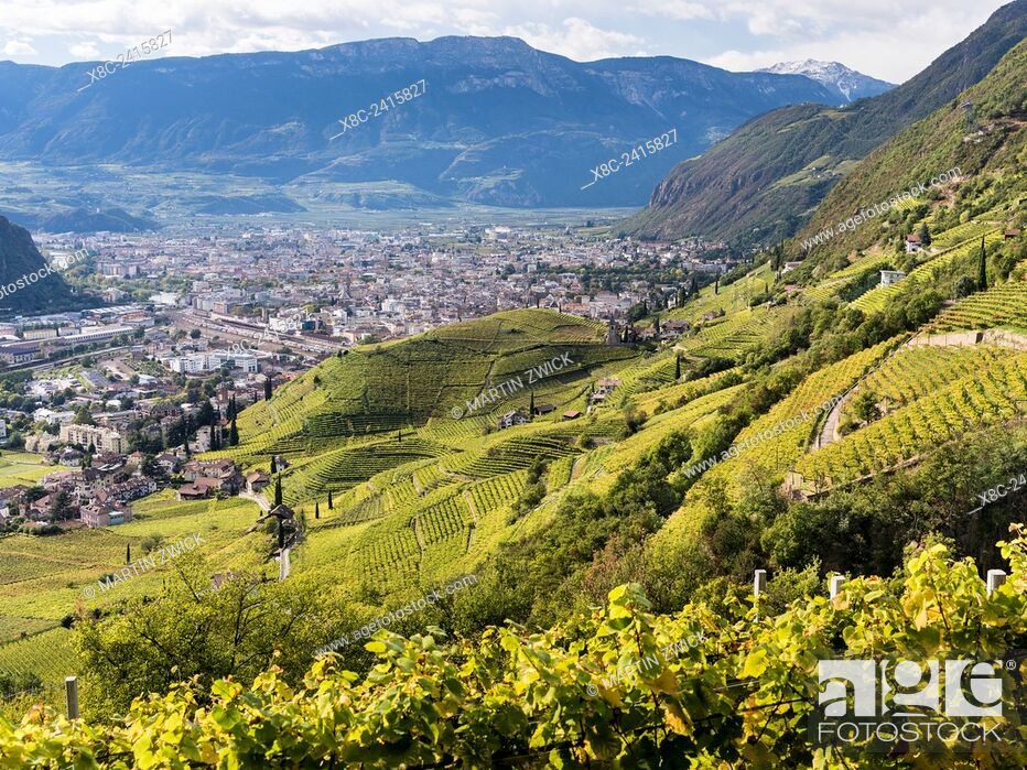 Imagen: Viniculture around Bozen (Bolzano) the capital of South Tyrol during autumn. Europe, Central Europe, South Tyrol, Italy.