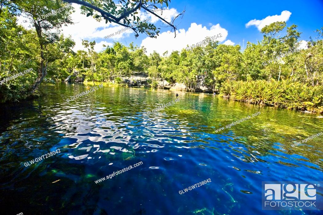 Stock Photo: Reflection of trees in water, Tulum, Quintana Roo, Mexico.