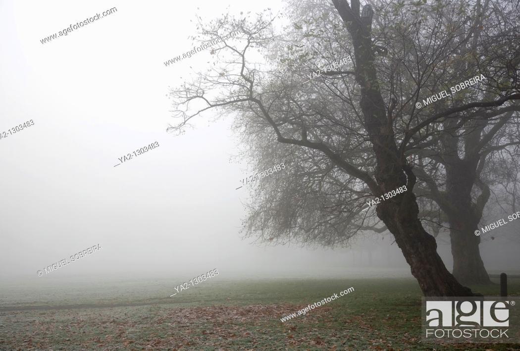 Stock Photo: Foggy Clapham Common Trees.