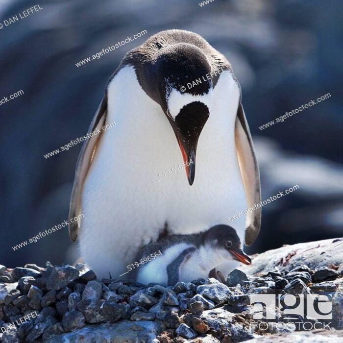 Stock Photo: Antarctica.