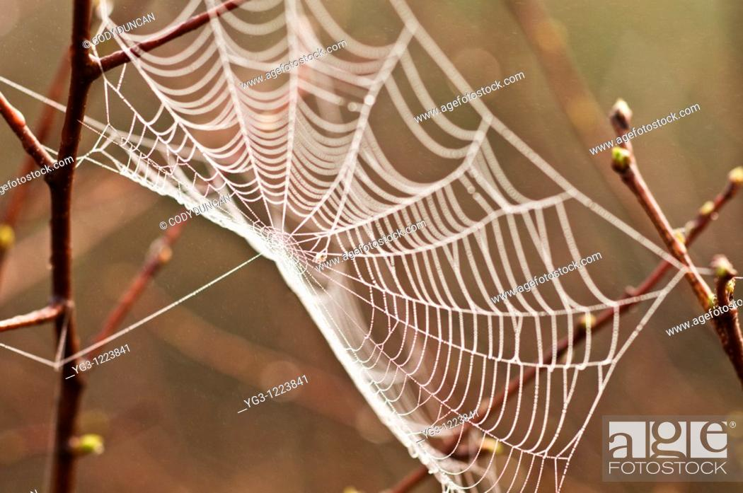 Stock Photo: Spiderweb wet with morning dew.