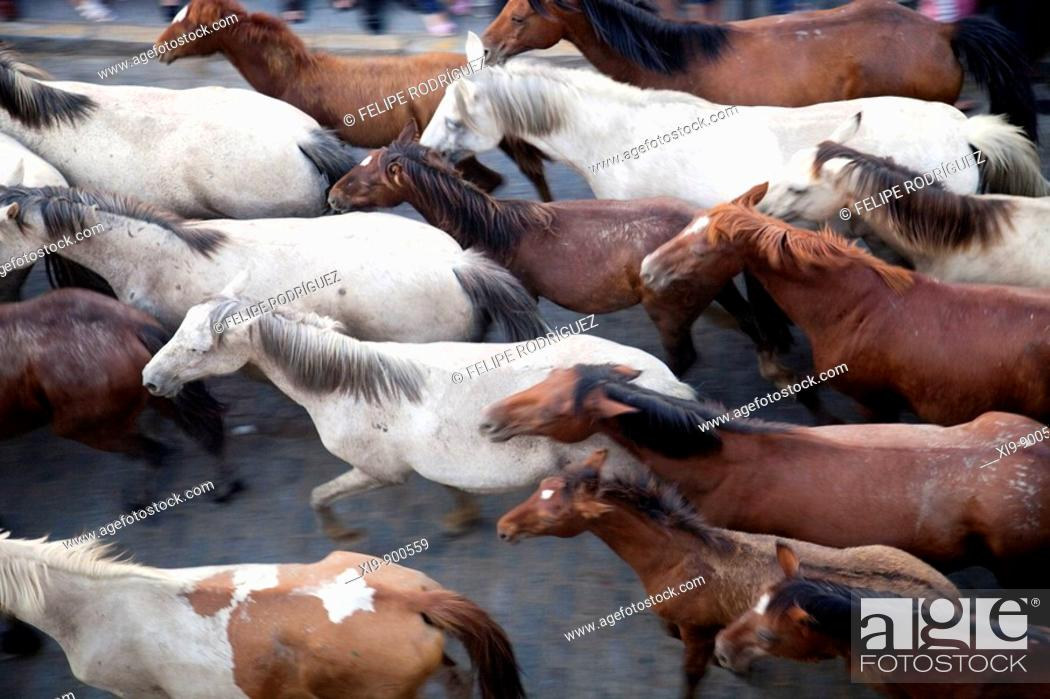 Stock Photo: Herd of horses, 'Saca de las yeguas' festival, town of Almonte, province of Huelva, Andalusia, Spain. Dating back to 1504, every 26th of June.
