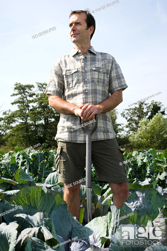 Stock Photo: Man standing in cabbage field.