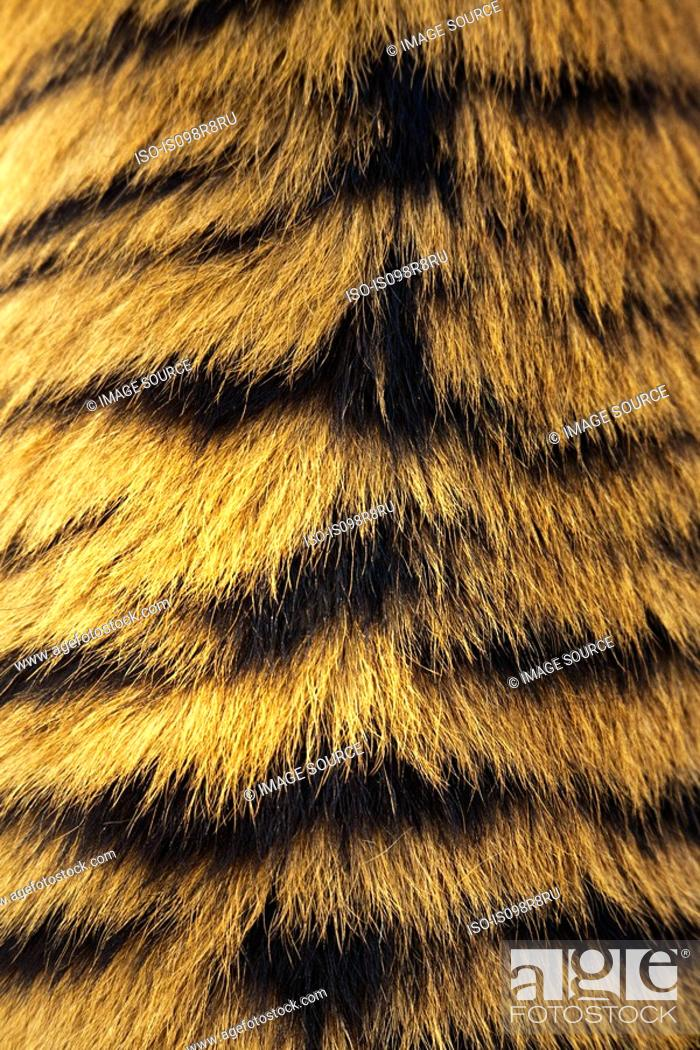 Stock Photo: Tigers fur.