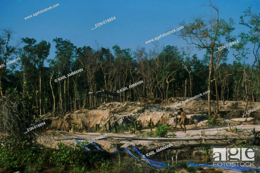 Deforestation, tropical rainforest in Borneo, clearance, habitat loss,  devastation soil erosion, Stock Photo, Picture And Rights Managed Image.  Pic. ESN-018894   agefotostock