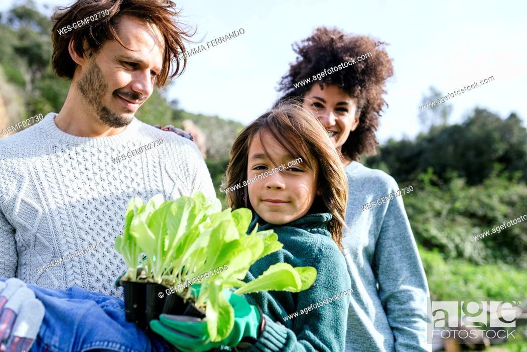 Stock Photo: Happy family holding lettuce seedlings in a vegetable garden.