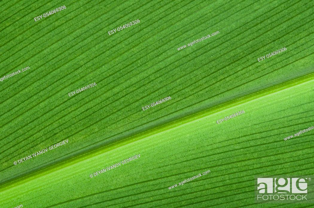 Stock Photo: Natural background of green leaf. Close up leaf surface.
