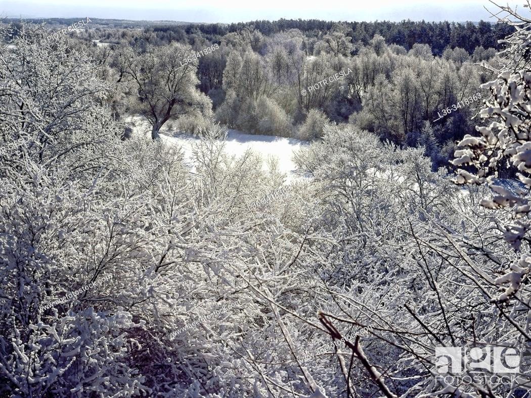 Stock Photo: Poland. Winter scene.